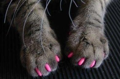 gheare din silicon pentru pisica