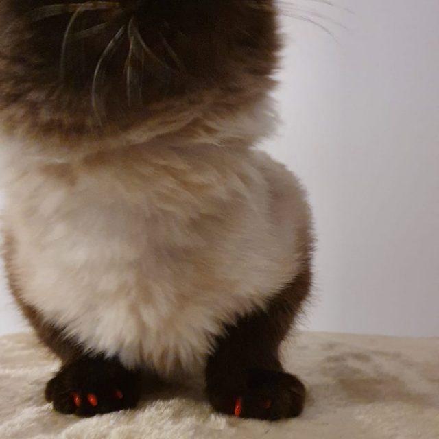 gheare din silicon pentru pisici