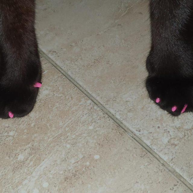 capace unghii moi pisici