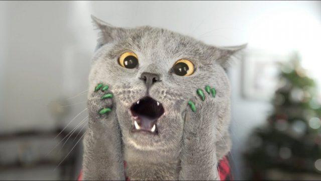 gheruțe din silicon pentru pisică