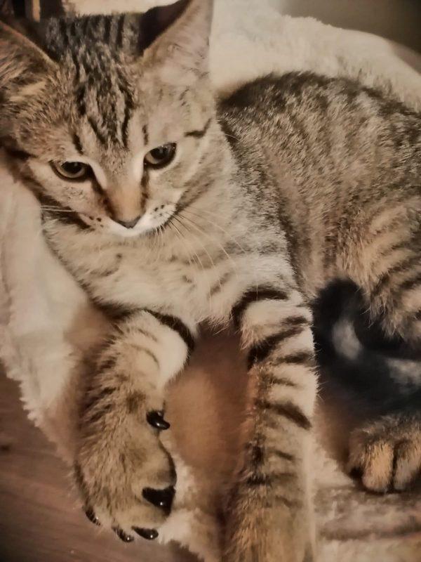 gheare din silicon moale pentru pisică