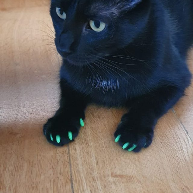 protecție gheare pisici